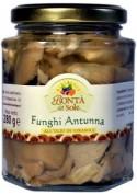 Oyster sardinian mushrooms - Bontà del Sole